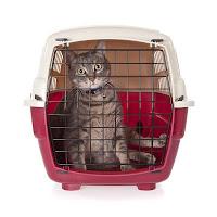 gato-confinamento