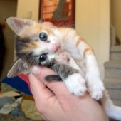 adestramento-de-gatos-carinho