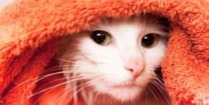 banho-gato-saude-8964