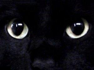 gato olhos