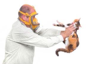 gatos-dao-alergia
