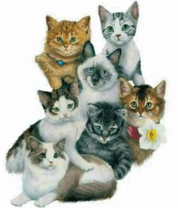 gatos varios