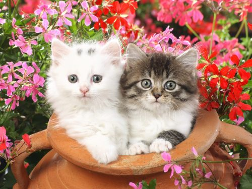 Resultado de imagem para Gatos nas flores