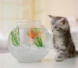 peixe_gato-700045