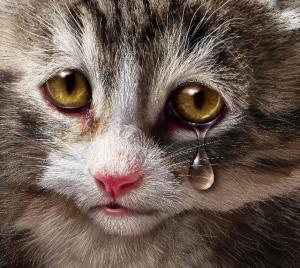 gatos-envenenados