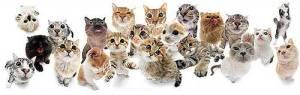 gatos_muitos_gatos