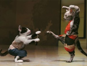 Luta-de-gatos